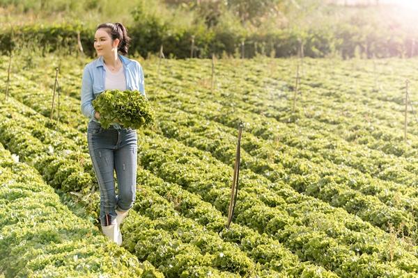 Lý Nhã Kỳ mướt mồ hôi vẫn xinh đẹp rạng ngời trong vườn rau